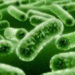 Польза пробиотиков для здоровья 2
