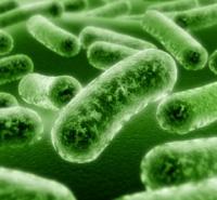 Польза пробиотиков для здоровья