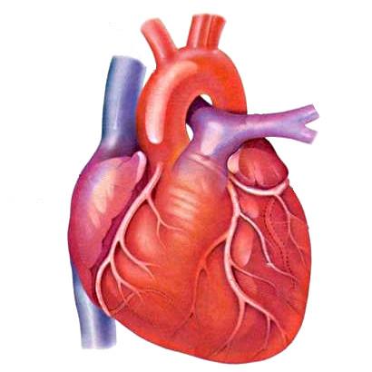 Что есть, чтобы сердце не болело?