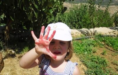 Mulberry harvest.2