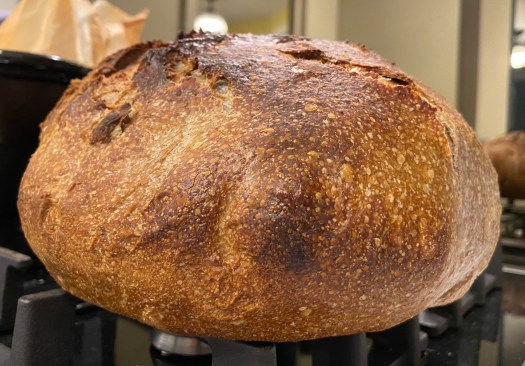A very round walnut bread loaf, like a rugby ball