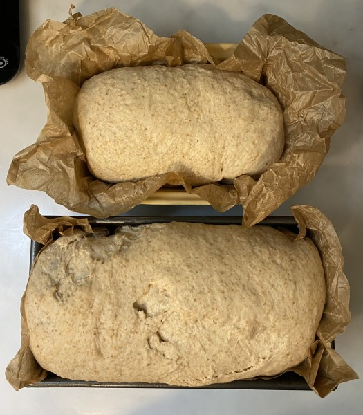 The two loaves after proving