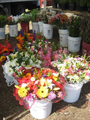 Mira Mesa Farmer's Market - Flowers