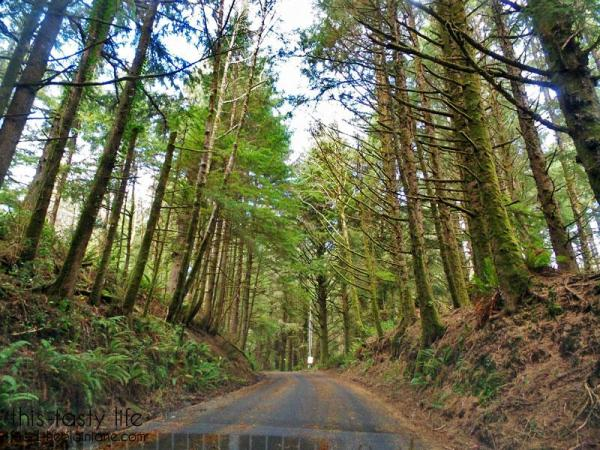 road-through-ecola-state-park