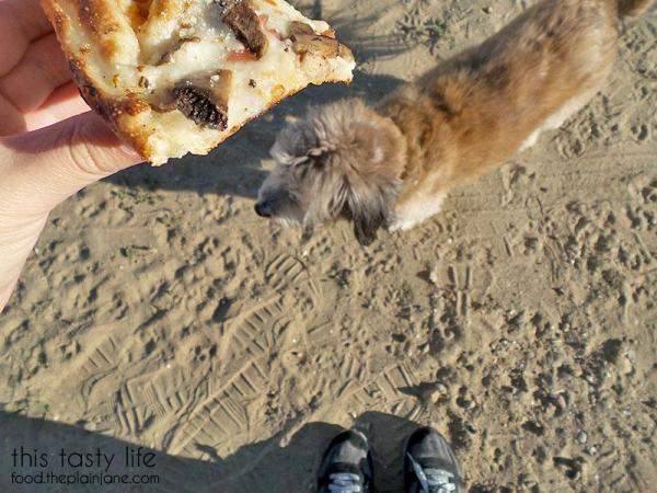 pizza-puppy-sand-shoes