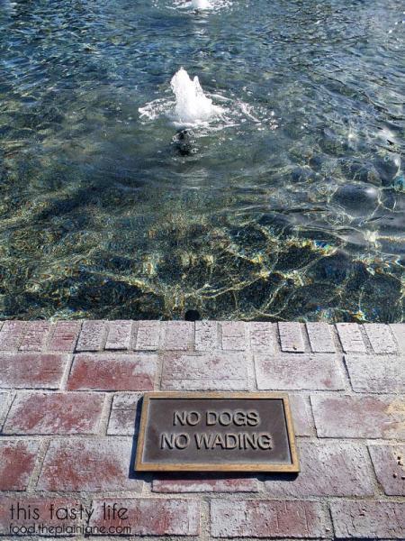 28-no-dogs-no-wading