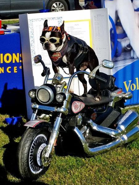 rockstar-biker-dog