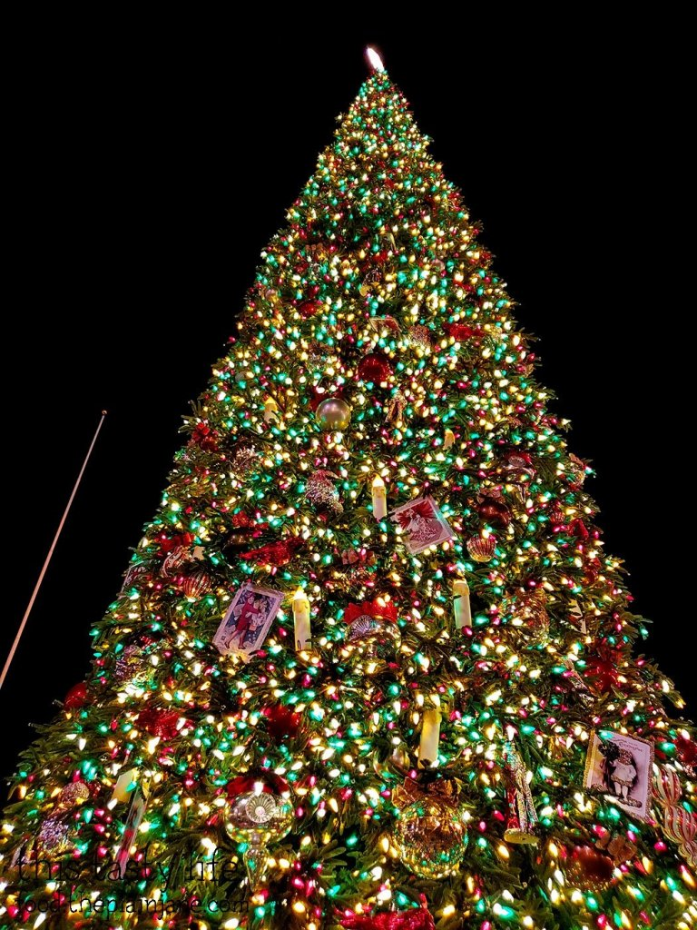 Christmas Tree on Main Street - Disneyland