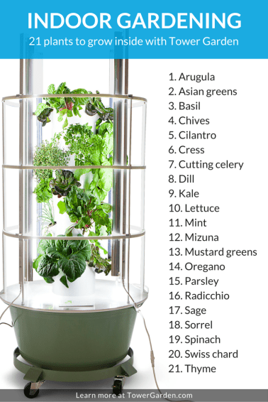 indoor-plant-list-pinterest