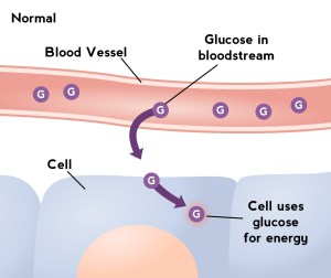 Glucose into Cells