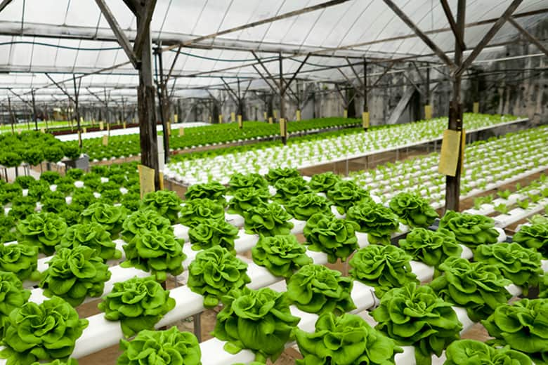how to start hydroponic plants