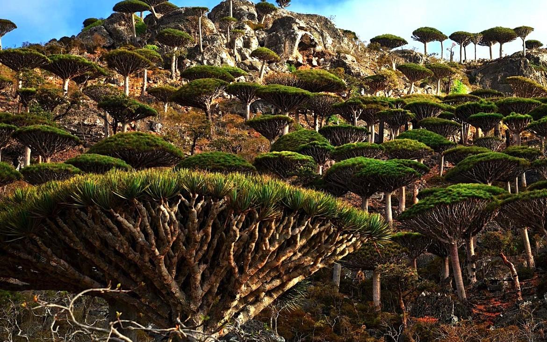 Socotra, la isla atrapada en el pasado que parece de otro planeta