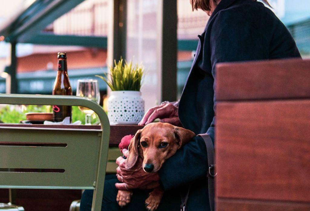 7 cafeterías 'Pet Friendly' en la Condesa para relajarte con tu mejor amigo