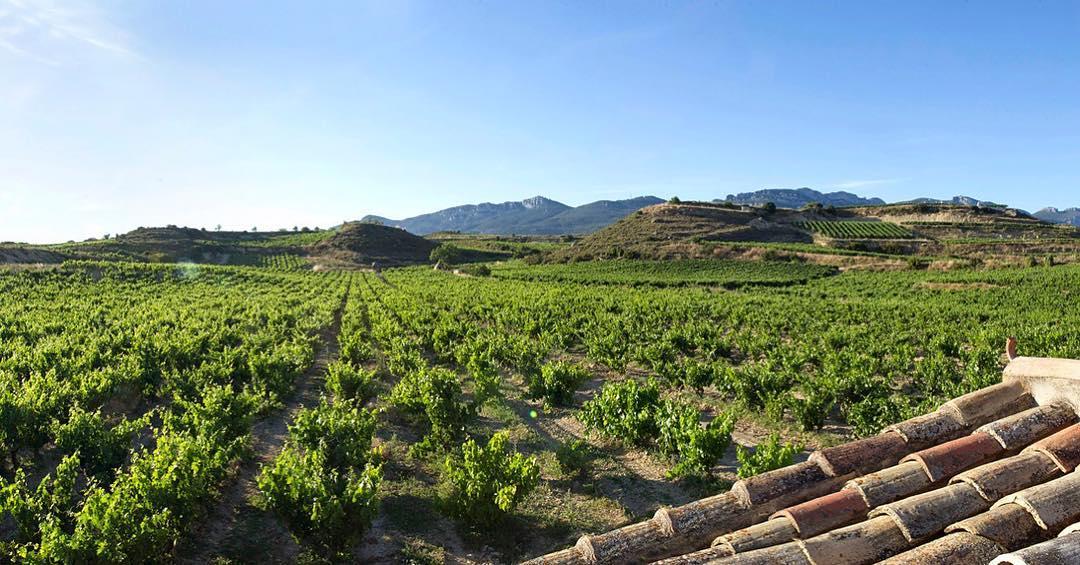 Izadi: Un regalo vinícola de la naturaleza