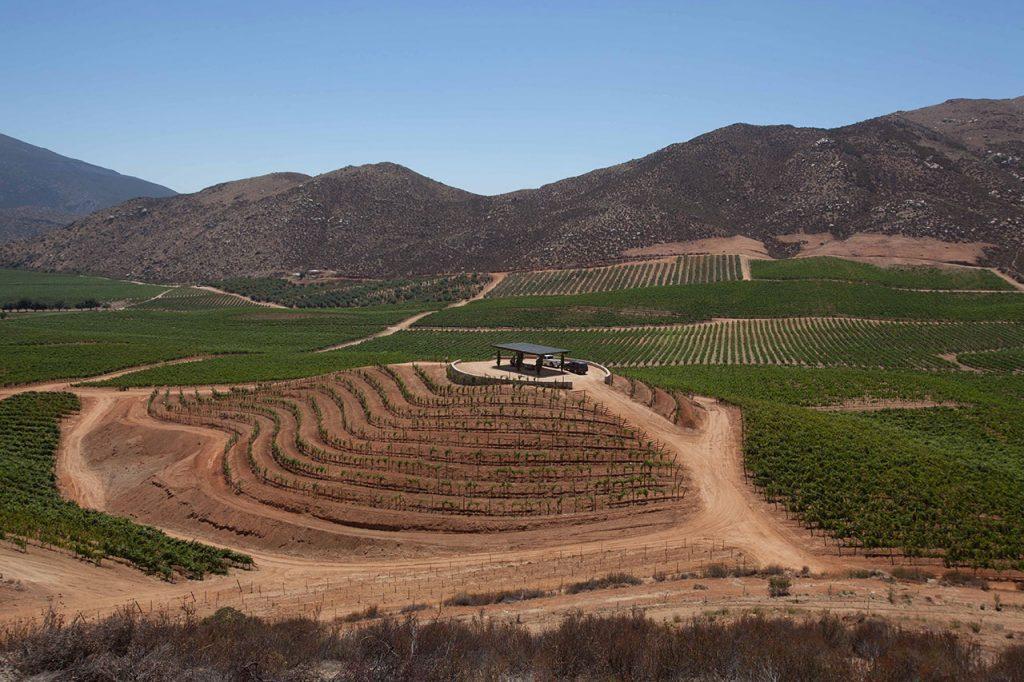 8 preciosos viñedos que tienes que visitar en México