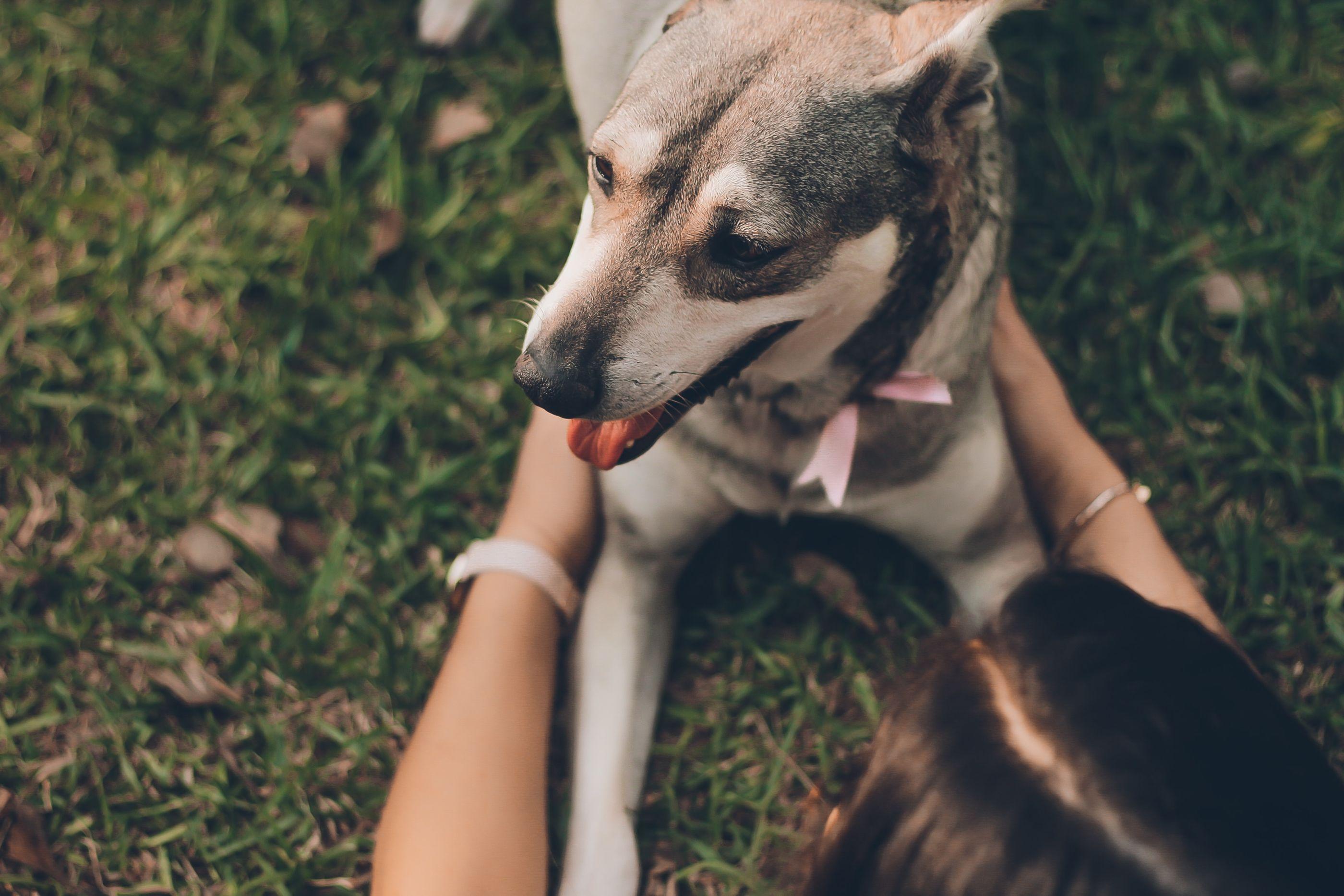 5 regalos originales y perfectos para 'dog lovers'