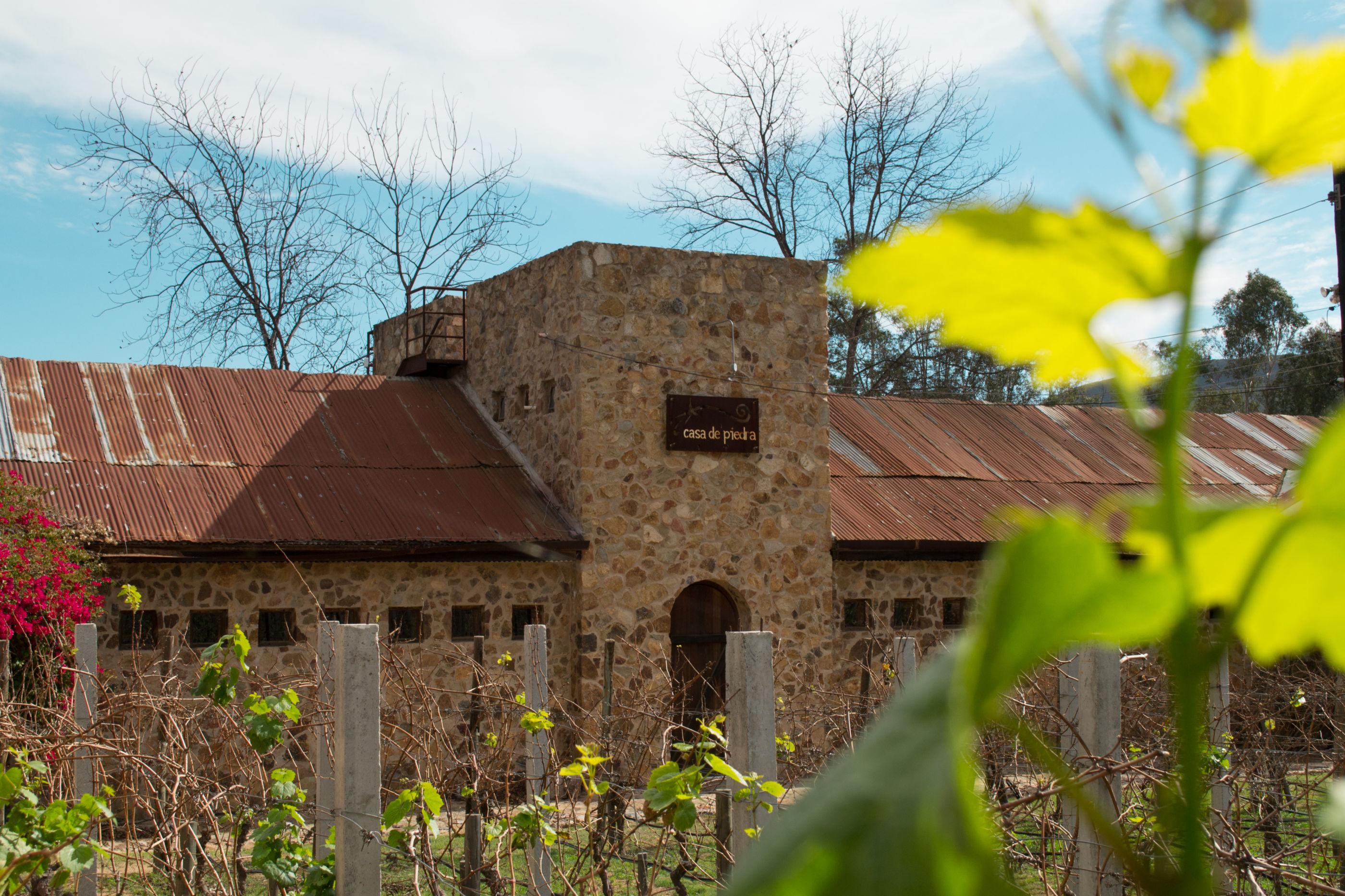 Road trip para conocer el vino mexicano de la mano de Hugo D'Acosta