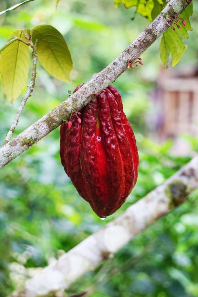 Ruta del Cacao: tips que debes tener en cuenta para un 'road trip' muy aventurero