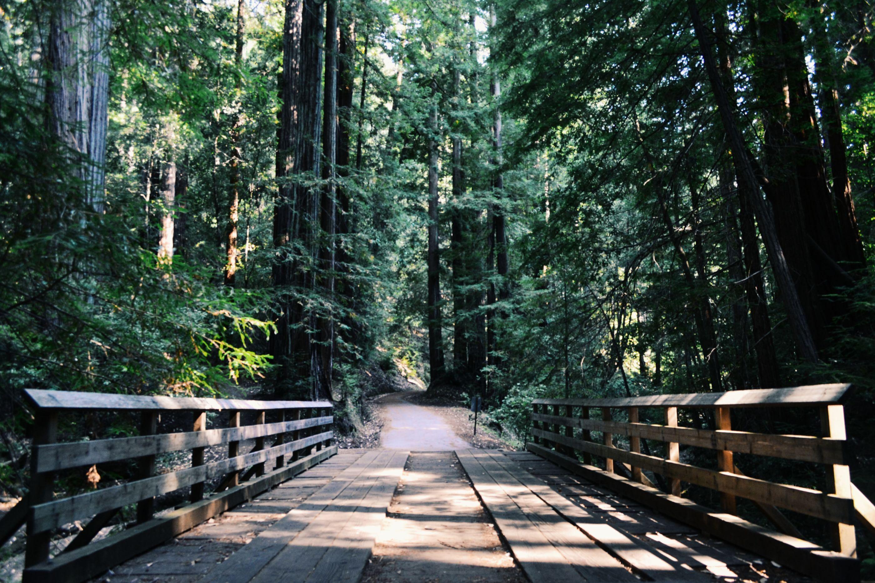 6 parques y bosques increíblemente lindos para correr cerca de la CDMX