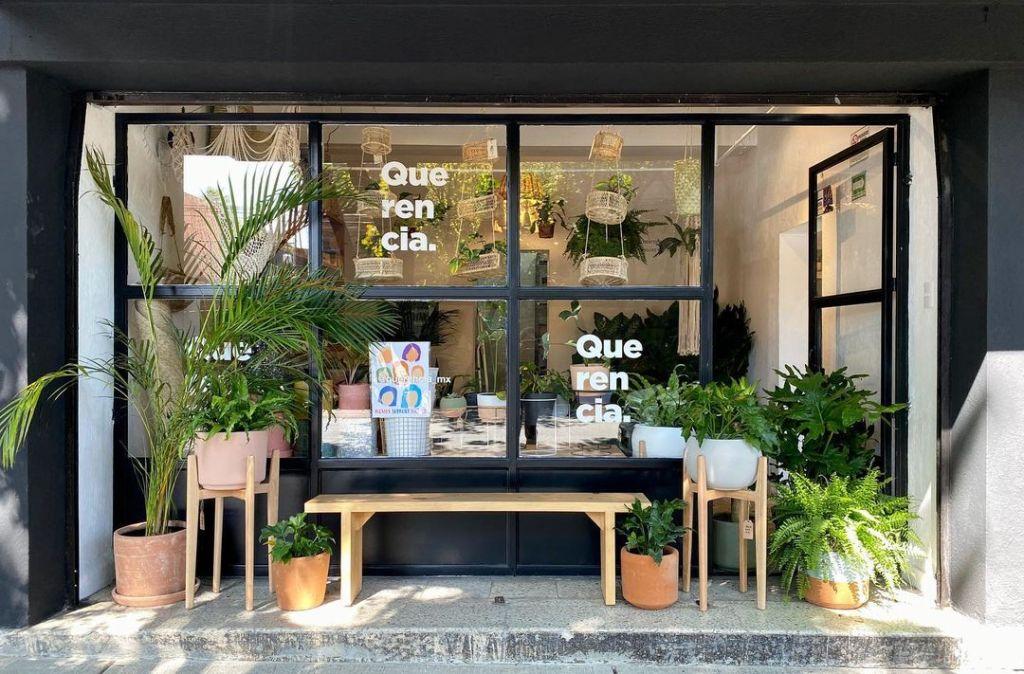 7 lugares donde podrás comprar las plantas más bonitas para decorar tu 'depa'