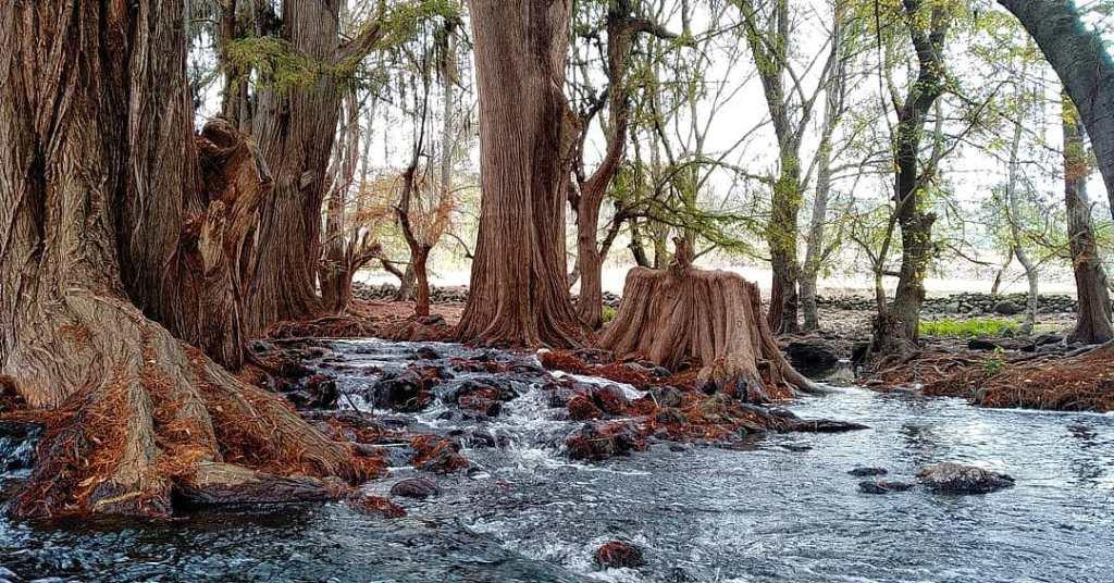 Cascadas El Fresno: Un oasis natural a menos de 2 horas de la CDMX