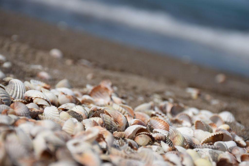 Bahamitas: la playa escondida en Campeche que en lugar de arena tiene conchas de mar