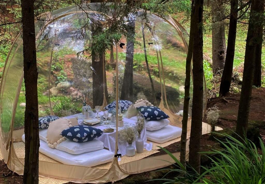 Bubble Picnic en el bosque: una experiencia culinaria única en el 'spot' más secreto de la CDMX