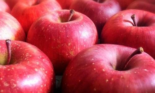 気になるりんごの黒い斑点! 食べても問題なし!?