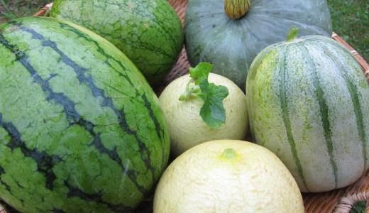 スイカは果物じゃないって知ってた!? 野菜とされる理由とは?