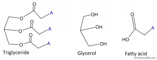 Triglyceride with glycerol and fatty acid