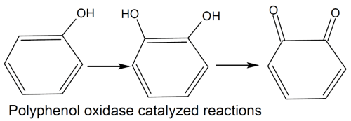 Polyphenol oxidase reactions catalyzed by ppo