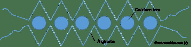 spherification, alginate and calcium egg box network