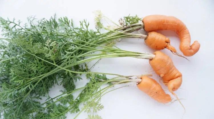 Image result for shriveled vegetable