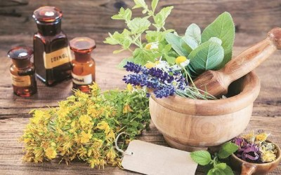 Top 7 Herbs And Medicinal Plants use Which are