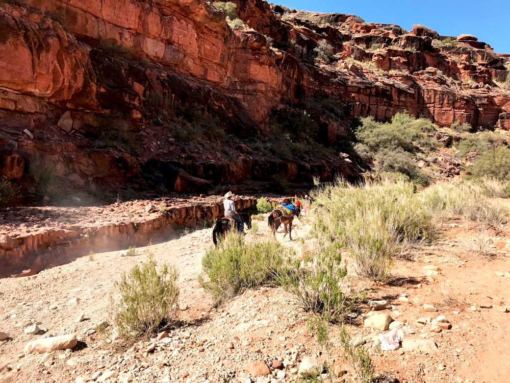 Pro Tip: Hire mules to carry your bags down and back up to Havasupai Falls!