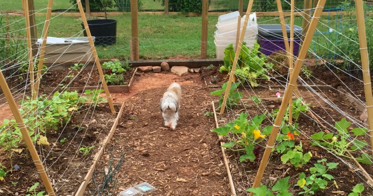 A Garden Update & A Great Paul Revere Impersonation