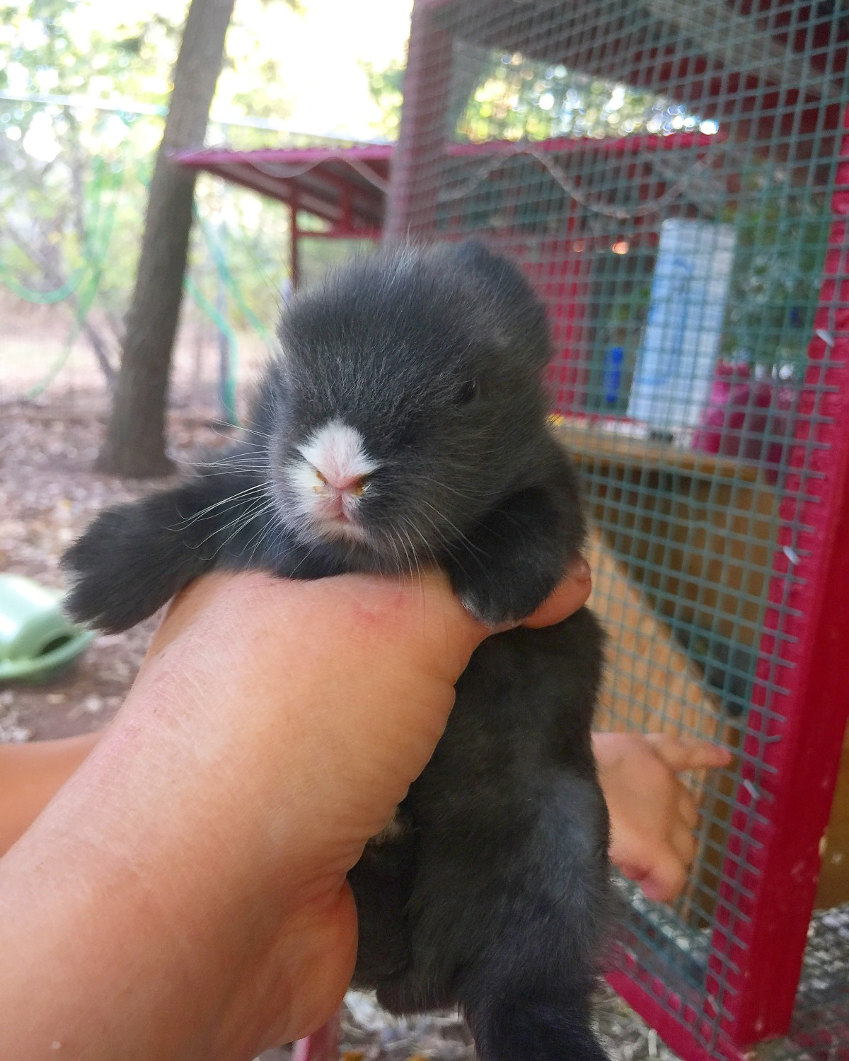 The Bunny Babies Are 2 Weeks Old! • Food For A Year: