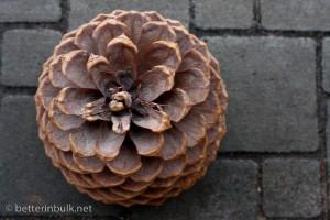 Pinecone - aperture f/9.0