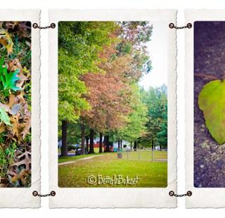 Still looking for Fall