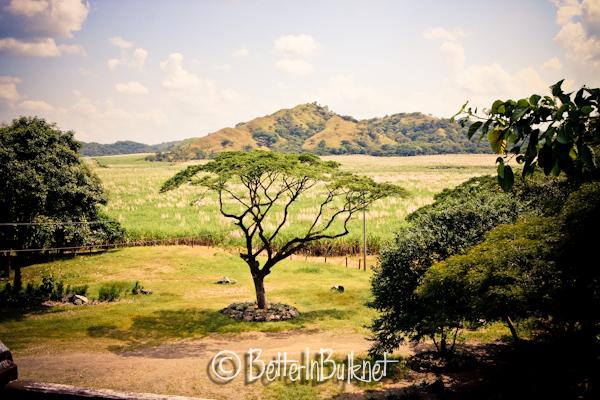 Sugar cane fields in Costa Rica