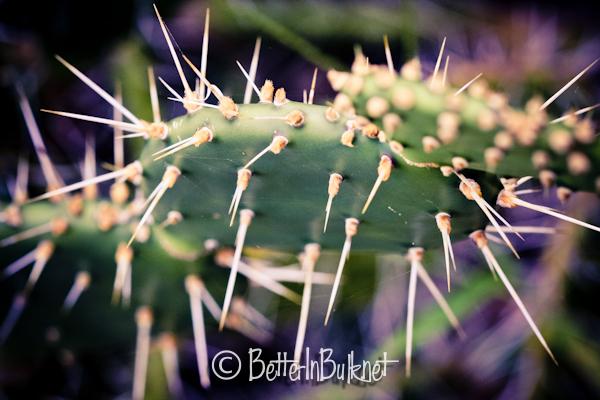 Costa Rican cactus