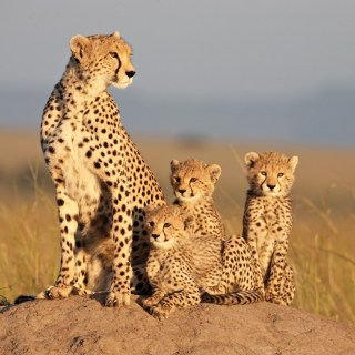 DisneyNature's African Cats – Help Save the Savannah