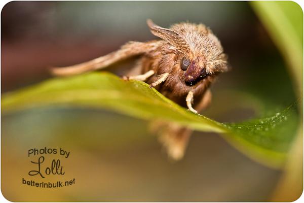 Mason the Moth