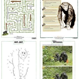 Chimpanzee – Disneynature Activities for Kids and Educators