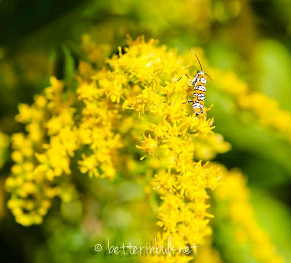 insect on flowers - nature photography