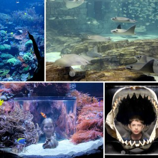 SeaWorld Orlando – #PSF Give Me Your Best Shot