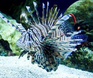 Awesome Aquarium with Andrea