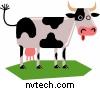 Cows get no respect