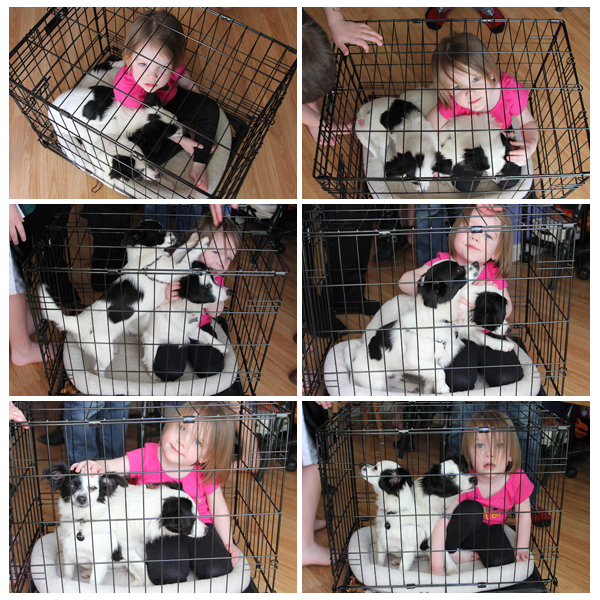 three in a cage