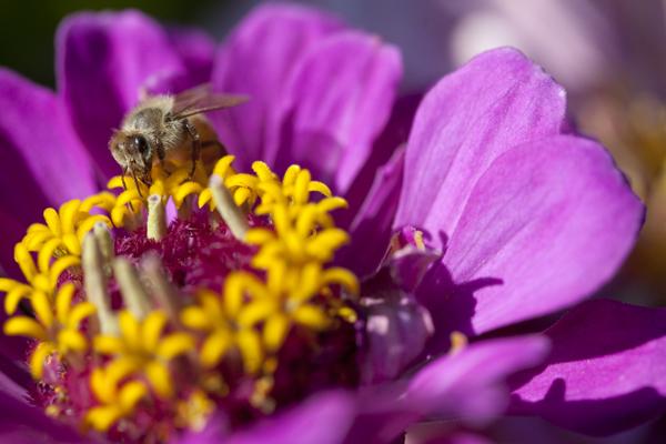 honey bee Wings of life dvd